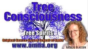 Tree Consciousness by the Tree Spirits