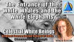 The Entrance of the White Whales and the White Elephants by the Celestial White Beings Channeled by Natalie Glasson from Sacred School of OmNa