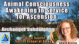 Animal Consciousness Awakening in Service for Ascension by Archangel Sandalphon